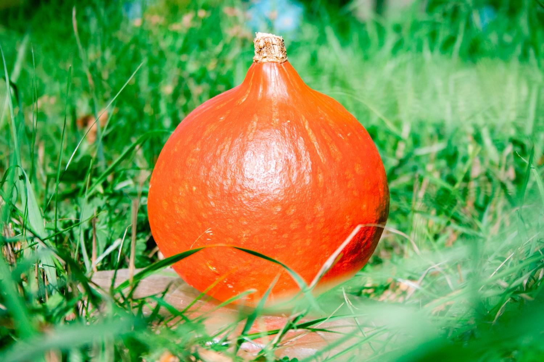 Pompoen oranje Hokkaido (tussen de 0.8 en 1.5 kilogram)